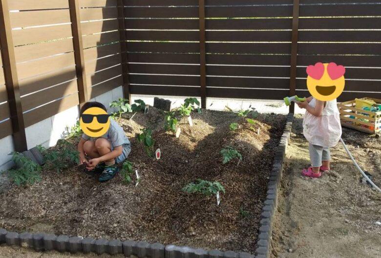 庭で野菜を植えている写真