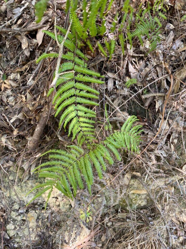 シダ植物の写真